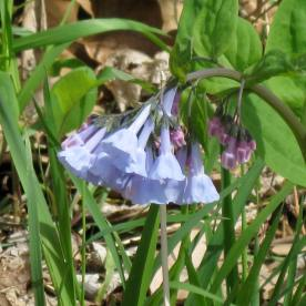 A bluebell hike