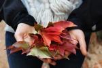 leaves-1031181_1920