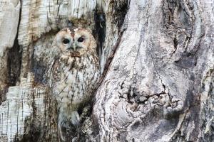 owl-1576572_1920