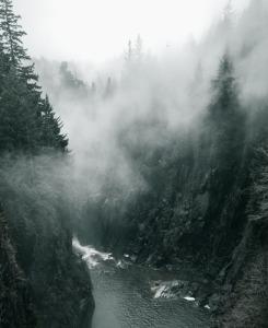 woods-863333_1920