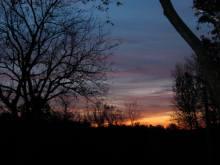 Morning Tendrils 2