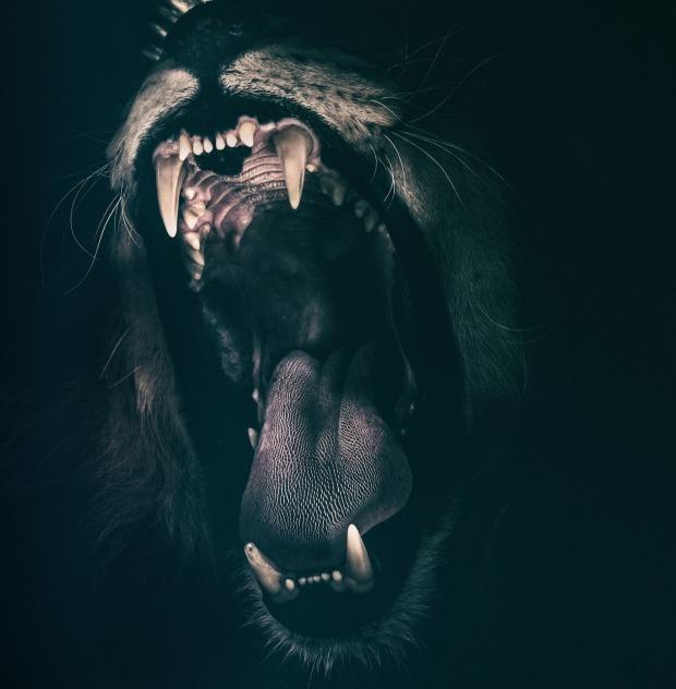 lion-2885618_1920.jpg