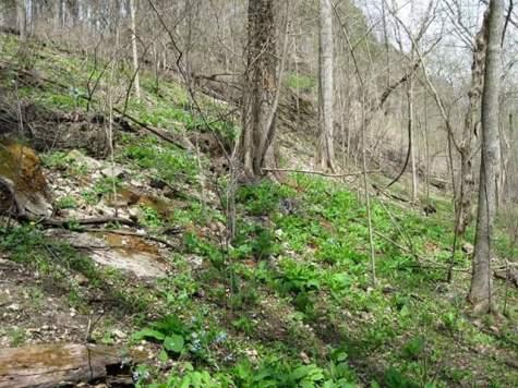 bluebells-on-hillside.jpg